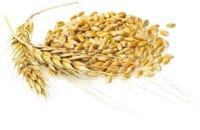 Сертификат качества и декларация соответствия на зерно